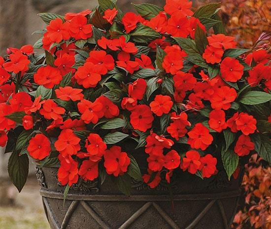 گل و گیاهان مناسب در مناطق گرمسیری