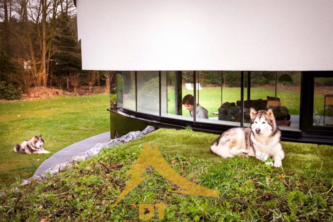 طراحی ویلایی گرد برای دوستداران سگها